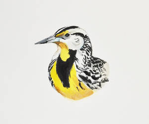Eastern Meadowlark by footinadream