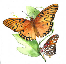 Corky Stem Passionvine and Gulf Fritillary by footinadream
