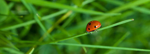 Ladybug 1 by schlafengehen