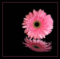 Pink flower by ozugun
