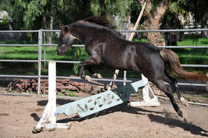 Jumping Pony Stock by upandy