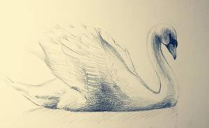 Swan sketch by Snowsupply