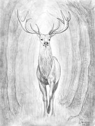 White deer by Ominously