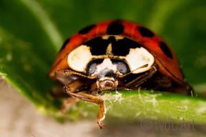 Ladybug by YvdlArt