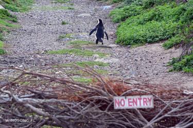 Penguin Outlaw by mizarek