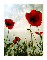Poppy Towers by mizarek