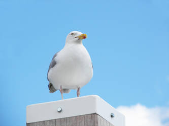 Watching seagull 4 by photohouse