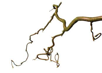 Twig 8 by photohouse