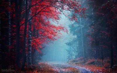 Redwood by m-eralp