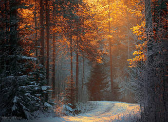 Gold frost by m-eralp