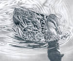 Duck - Graphite pencil drawing by kad-portraits