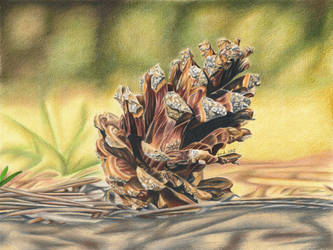Pine Cone - colored pencil drawing by kad-portraits
