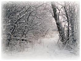 Snowy Trail by Lillith8810