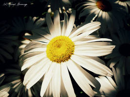 Spotlight by Lillith8810