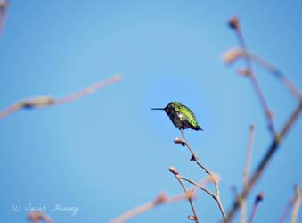 Little Green Hummingbird by Lillith8810