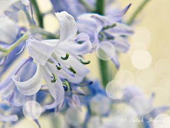 Harebell by Lillith8810