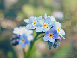 Forget Me Not by Lillith8810