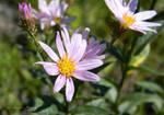 Wild Flower by Lillith8810