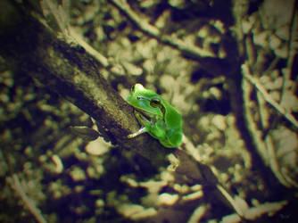Frog near Chernobyl by Dash-POWER