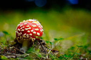 Muscaria by tortagel