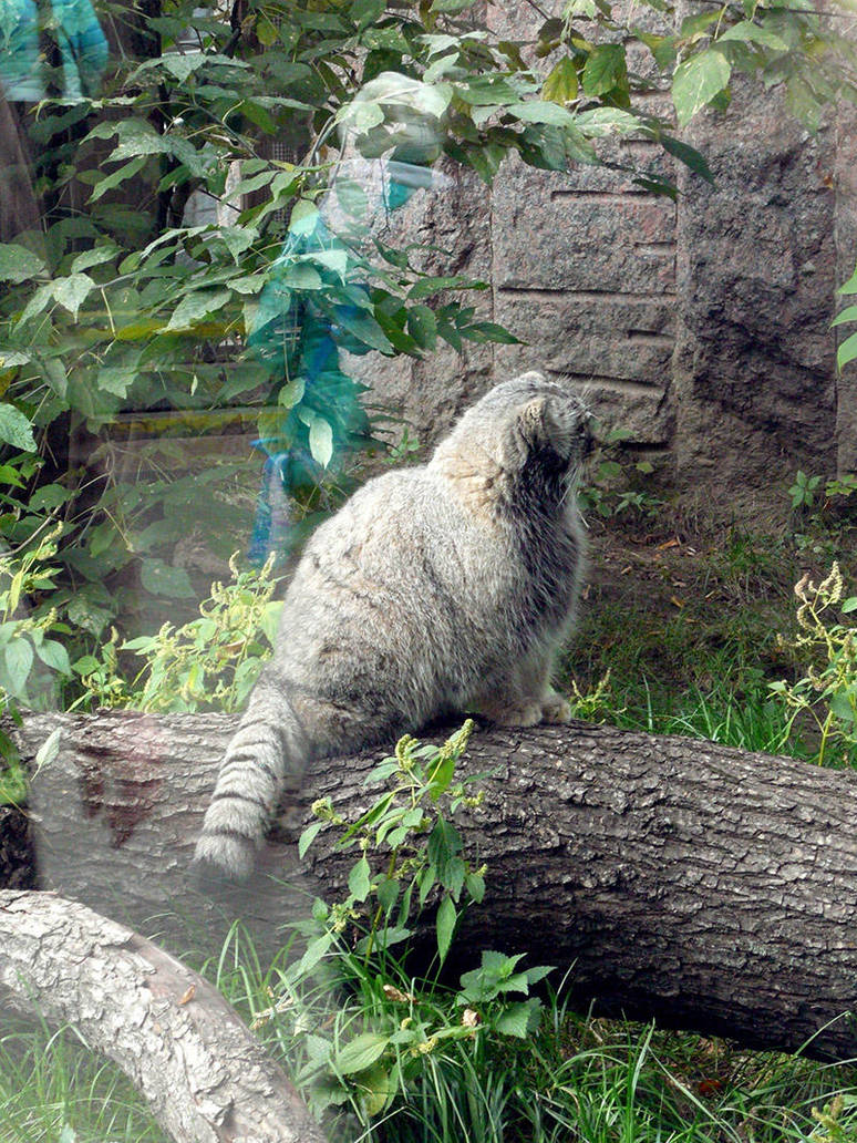 Moscow zoo 3 by J-dono