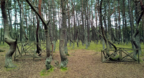 Curonian Spit :October: 5 by J-dono