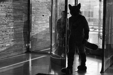 Cat Walk by Pyatthemouse