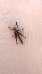 Grasshopper  by N1ckyb0b