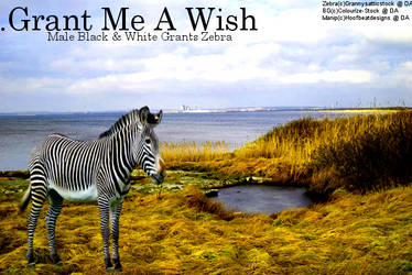 Grant Me A Wish by HoofBeatDesigns