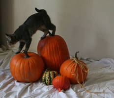 The Pumpkin Kitten 11 by MajesticStock