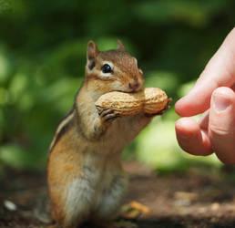 Hungry Chippy by Sueki-Sueki-La