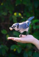 Jay in the Hand by Sueki-Sueki-La