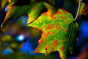 Raw Fall by Insomnolepsy