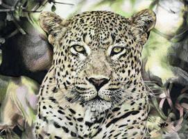 Leopard by cherrymidnight