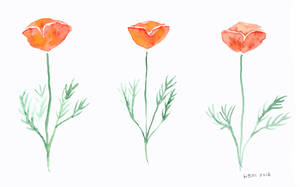 California Poppies by matildarose
