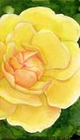 Yellow Rose by matildarose