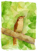 Carolina Wren by matildarose