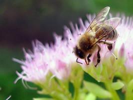 Bee by wojtekmaj