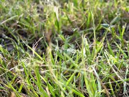 Grass by wojtekmaj