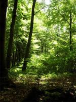 Forest by wojtekmaj