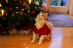 Santacat by Quiet-bliss