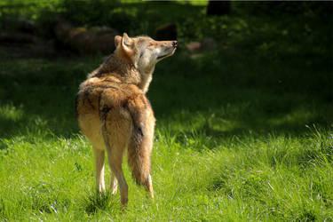 sun worshiper by Quiet-bliss