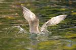 bumpy landing by Quiet-bliss