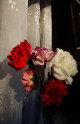 Carnations by midnite-silver