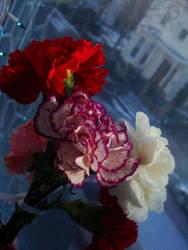 Carnations II by midnite-silver