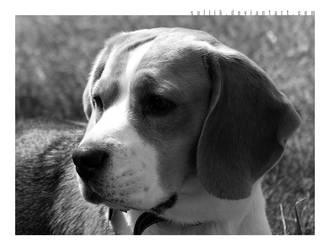 Ax, the dog II by SULiik