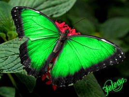 Butterfly by Stanky991