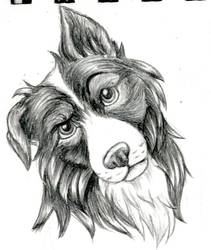 Border Collie Sketch by LegendaryBagel