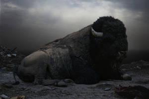 Buffalo by BlackCrow907