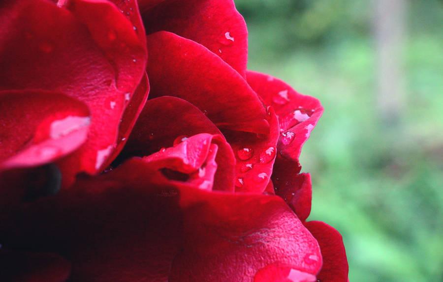 On a rainy Sunday by adumvgh
